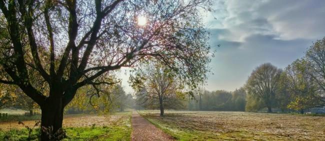 Chemin arbres soleil verdures