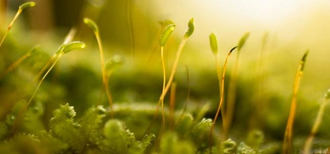 Végétaux jeunes pousses